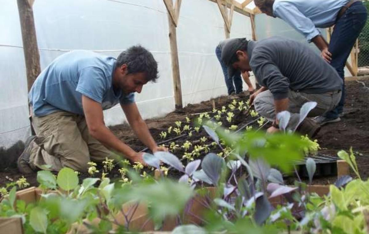 Bariloche avanza en la promoción de la agricultura urbana