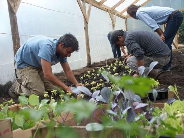 El vivero municipal ya tiene plantines de lechuga, albahaca, perejil, repollo, tomate, acelga y pimientos