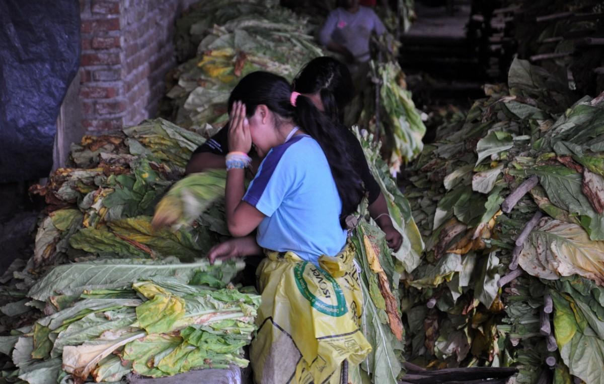AFIP encontró en Jujuy a 8 menores trabajando y pidió la detención del dueño de la finca