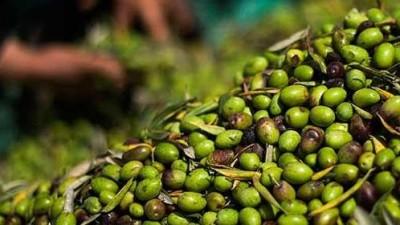 Dorrego: la comuna invertirá en equipos para olivicultores