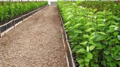 Trelew: Secretaría de Producción capacitará cosecheros para la siembra bajo cubierta