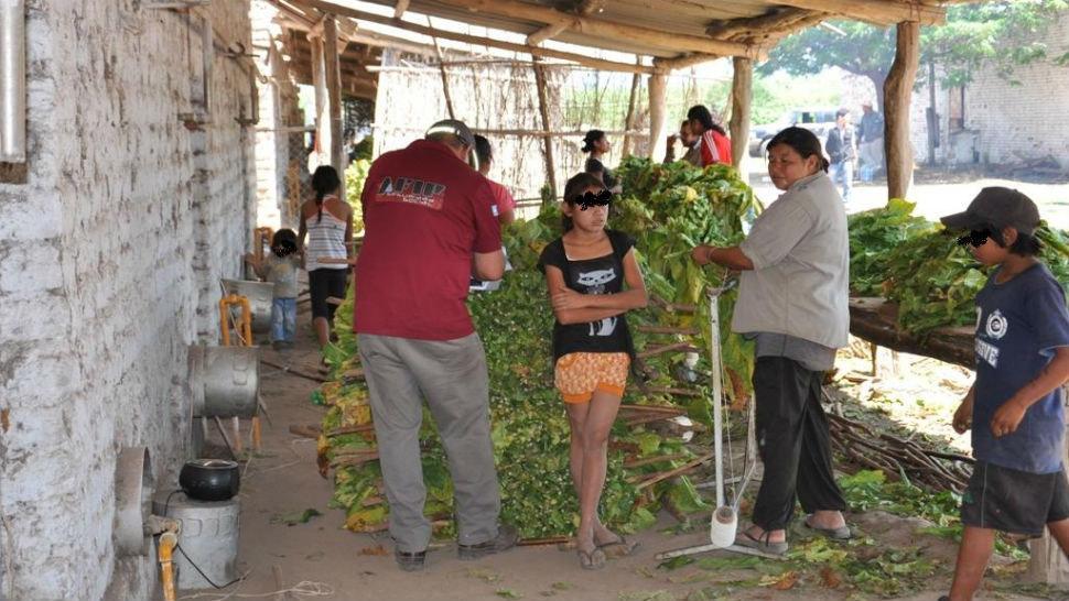 La AFIP detectó a mujeres y niños realizando tareas de encañado de tabaco, sin condiciones de seguridad ni higiene.
