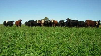 El verdadero impacto de la agricultura argentina en el calentamiento global
