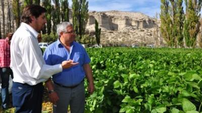 Chubut tuvo su primera cosecha de soja