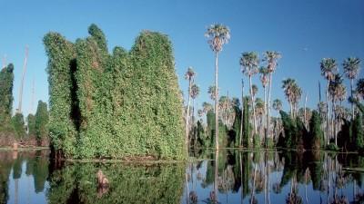 La zona de trasvase del bañado La Estrella recibe diariamente a muchísimos visitantes