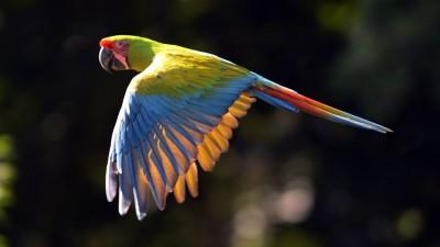 Salta muestra al mundo su gran variedad de aves