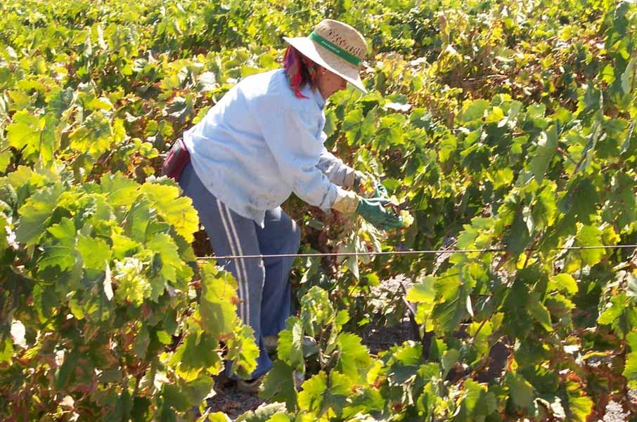 mujer trabajando en el campo