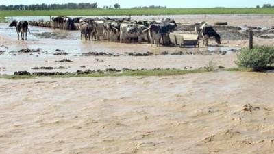 Estiman pérdidas millonarias en los campos inundados por el río Cuarto