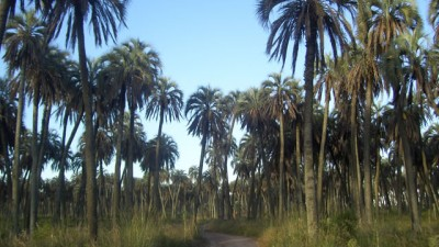 Fortalecen la participación de los pobladores del sitio Ramsar Palmar Yatay