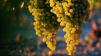 San Juan recibe a referentes vitivinícolas de todo el país para defender la ley de mosto