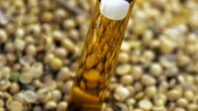 Bella Vista: analizan un proyecto para instalar una empresa de biocombustible