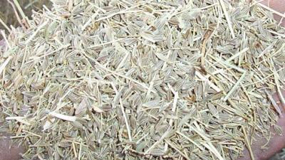 Municipio de Tinogasta compra molino desintegrador para productores de comino