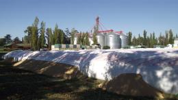 Fondo sojero para las provincias cayó 64%, porque productores retienen la oleaginosa