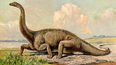 Encontraron en Neuquén restos de un dinosaurio único en América del Sur