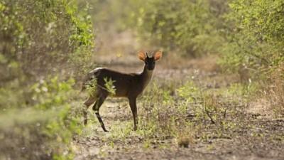 El Senado aprobó proyecto para crear el Parque Nacional Impenetrable