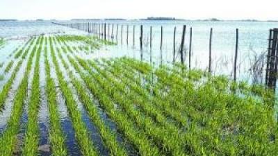 Las abundantes lluvias complican a los campos bonaerenses