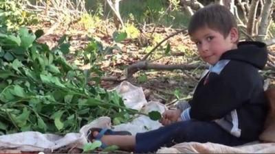 """Misiones: Solicitan acciones para la campaña de """"Mate sin trabajo infantil"""""""
