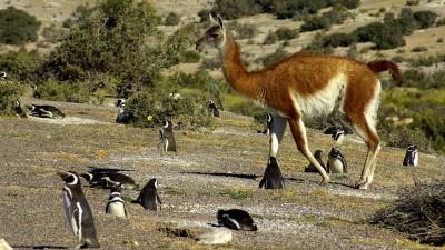 Turismo trabaja para crear en Chubut la mayor Reserva de Biósfera de la Argentina
