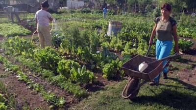 Municipio de Chumbicha propone vuelta a las huertas familiares, escolares y comunitarias