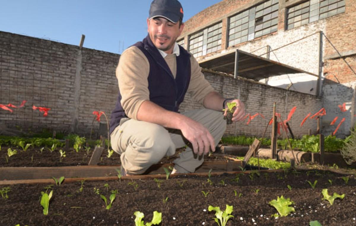 Paraná: Huertas familiares, una opción saludable que ayuda al bolsillo