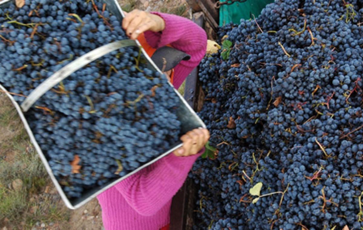 """""""En Tinogasta se recuperó el valor de los viñedos, y hubo un cambio importante en los ingresos"""""""