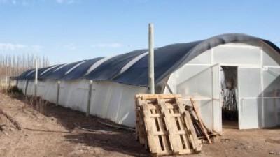 Buscan potenciar la economía local en Centenario con nuevos invernaderos