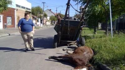 Bahia Blanca: anuncian la prohibición de la tracción a sangre en 30 días