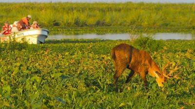 Buscan crear un Manual de Obras Públicas Turísticas para los Esteros del Iberá