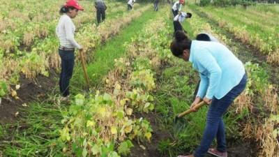 La Banda: Buscarán crear una base de datos de desempleados