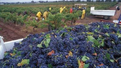 Por primera vez en la historia, España superó a Francia en el mercado mundial del vino