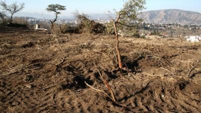 """Países y empresas prometen """"deforestación cero"""" para 2030"""