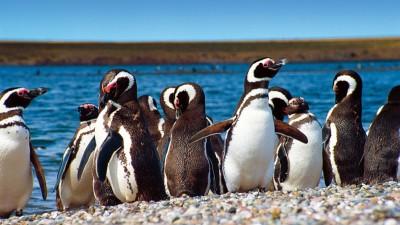Fiesta Provincial del Pingüino, 27 y 28 de septiembre, Trelew