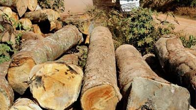 La deforestación se llevó 762.000 km² del Amazonas brasileño