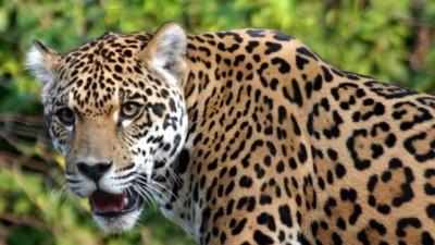 En 40 años, América latina perdió 83% de su fauna silvestre