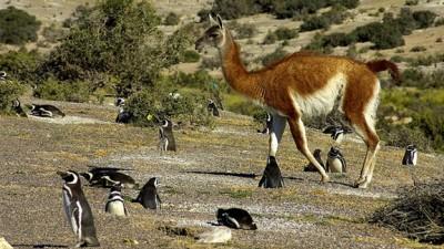 Quieren crear en Chubut la mayor reserva de biósfera de la Argentina