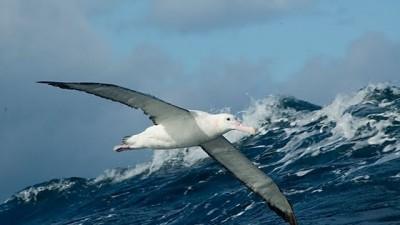 El Congreso aprobó crear un sistema nacional de Áreas Marinas Protegidas