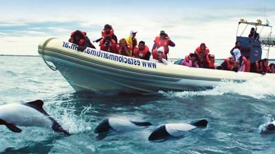 """Comienza enRawson la temporada de """"Toninas, el delfín patagónico"""""""