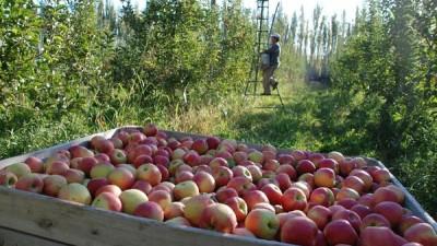 Dos mercados gigantes para la fruta de la región Patagónica