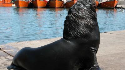 Récord histórico de turistas en Mar del Plata