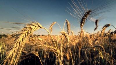 Acuerdan beneficios para pequeños productores de trigo y soja