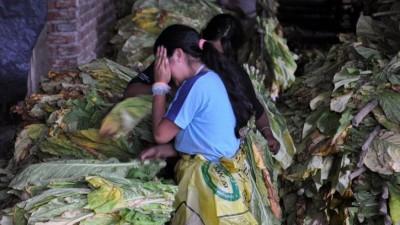 La trata laboral sumó 550 víctimas en Salta en los últimos meses
