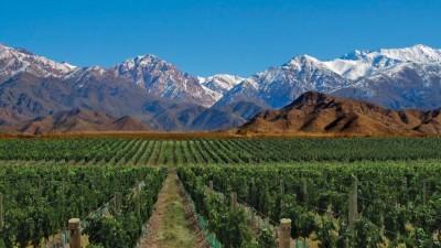 En la última década se duplicó en el país la superficie cultivada con malbec