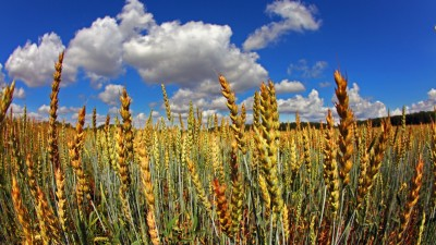 La Argentina produce alimentos para sostener diez veces su población