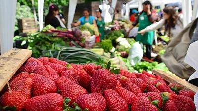 """""""La agricultura familiar representa el 66 por ciento de los productores agropecuarios de nuestro país"""""""