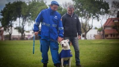 Mar del Plata: Entrarán en acción la Unidad Canina de la Policía Local