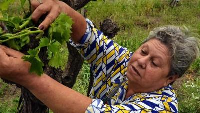 En Santa Rosa, el granizo dañó buena parte de los viñedos