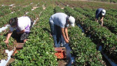 Avanza un proyecto para el desarrollo de unas 10 mil familias de pequeños agricultores y pueblos originarios