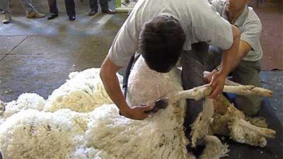 Chubut: Polémica por la eliminación de las retenciones a las lanas