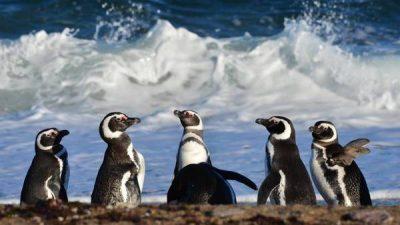El Valle inferior del río Chubut guarda una atractiva fauna