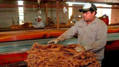 Industria tabacalera: más de 3.600 puestos de trabajo corren riesgo por el impuestazo